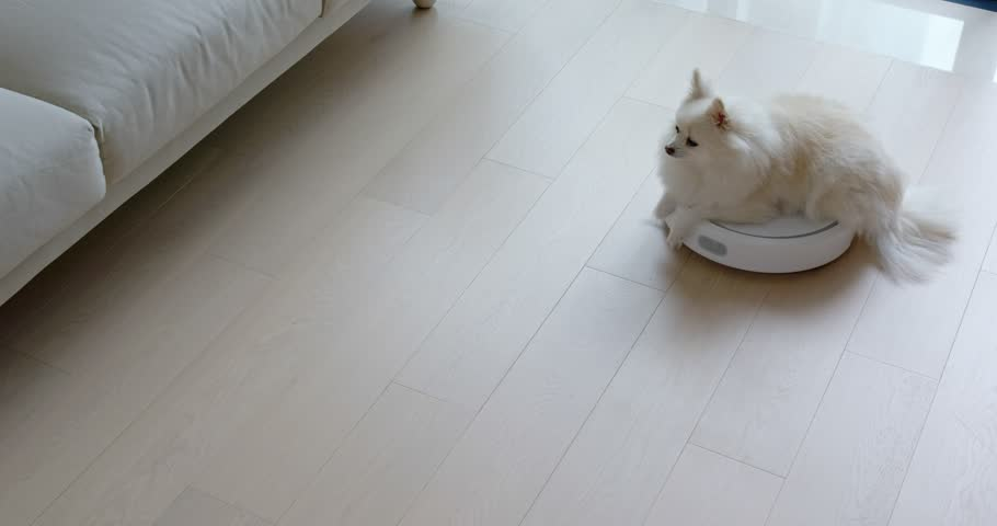Pomeranian Dog sit on robotic vacuum cleaner slides across the room | Shutterstock HD Video #1024044032