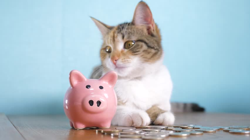 Piggy bank and cat teamwork funny video money concept finance business accounting. Money cat pet pile growing money and piggy bank. hand puts coins in a piggy bank. saving money is an investment for | Shutterstock HD Video #1024524212