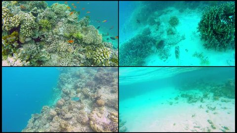 Collage Ocean scenery on shallow coral reef. Underwater video of the ocean. Small fish swim erratically and hidden by algae. Colored corals and fish in the Maldives.