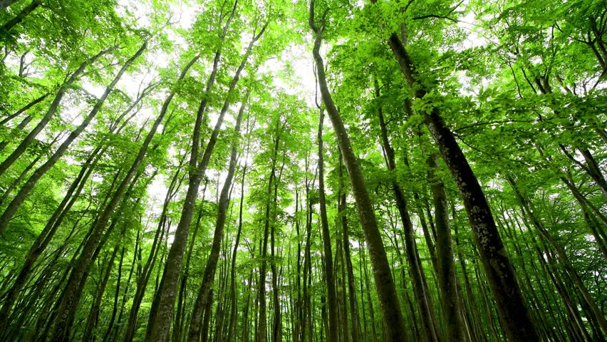Forest of the beech | Shutterstock HD Video #1024720322