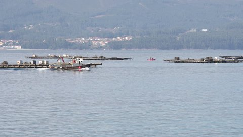 Mussel boat sailing between mussel platforms called bateas. Marine landscape. Rias Baixas, Galicia, Spain