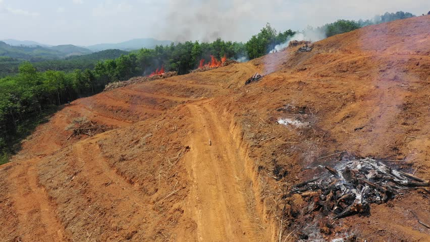 Deforestation. Rainforest environment cut down and burned for palm oil industry