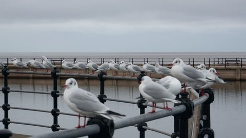 Seagulls seat the fence at the seaside promenade of New Brighton late afternoon