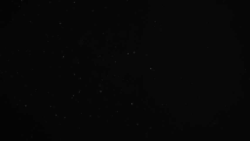 Natural Organic Dust Particles Floating On Black Background. Dynamic Dust Particles Randomly Float In Space With Fast And Slow Motion. Shimmering Glittering White Particles With Bokeh In The Air. | Shutterstock HD Video #1025619392