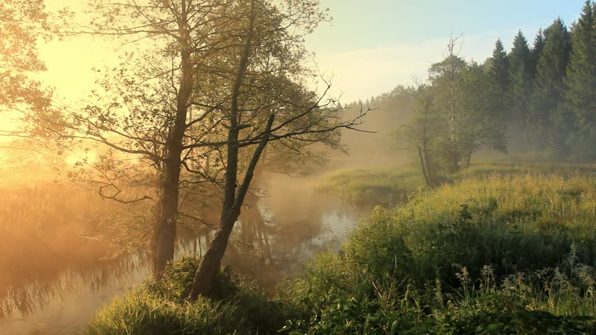 Sunrise in the forest near the river on a foggy morning beautiful sunny color pastel colors. Wild nature | Shutterstock HD Video #1025821052