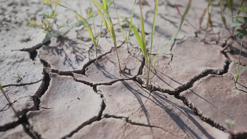 Very beautiful and authentic dry cracked earth. Largly. Cinematic. The camera is in motion.   Shutterstock HD Video #1025846912
