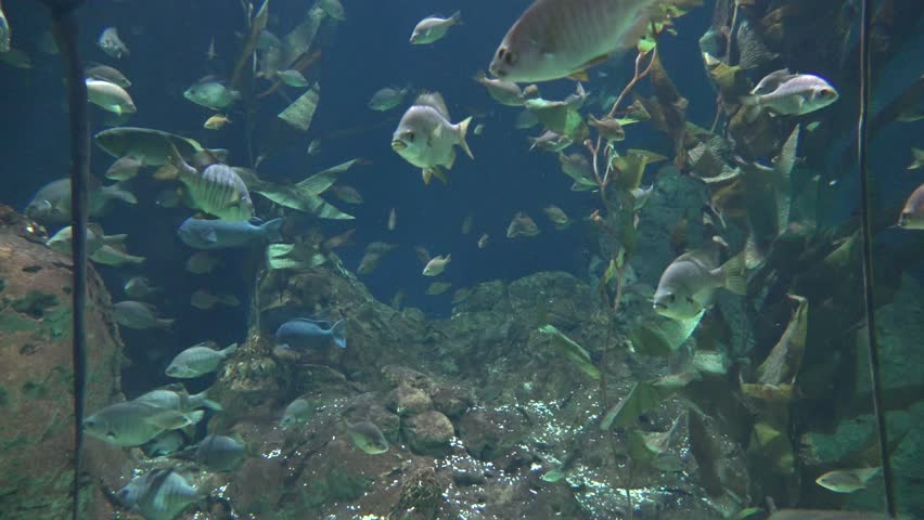 Plant Life And Fish   Shutterstock HD Video #1025918552