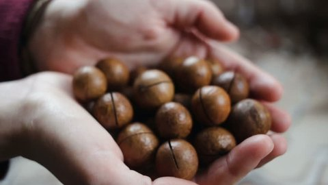 A handful of brown, shiny balls in women's hands are poured from hand to hand. Macadamia nuts are expensive and rare nuts. Close-up, real time, side view
