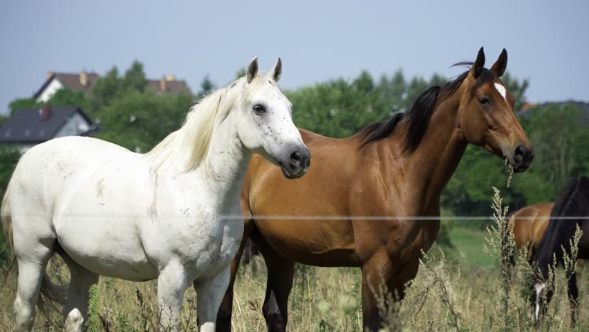 Two horses on the countryside on a sunny windy day. #1026751622