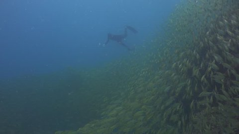 Freediver swims on the background of schools of fish (Oxeye Scad - Selar boops)