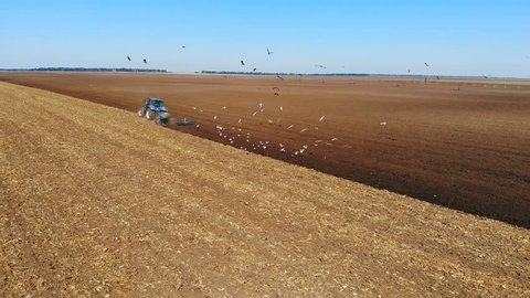 Tractor plowing a agricultural field, aerial view - Drone shot of tractor cultivating arable land for seeding crops, gulls flying around
