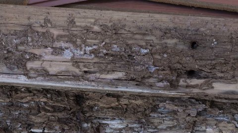 Termite damage on wood torn from a home