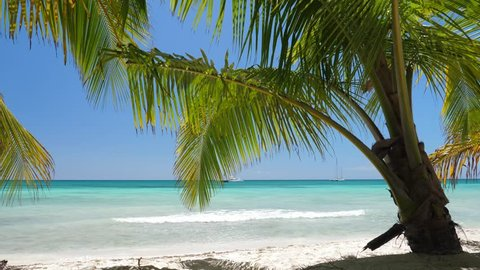 Coconut palm trees on white sandy beach on caribbean island. Vacation holidays summer. Dominican Republic