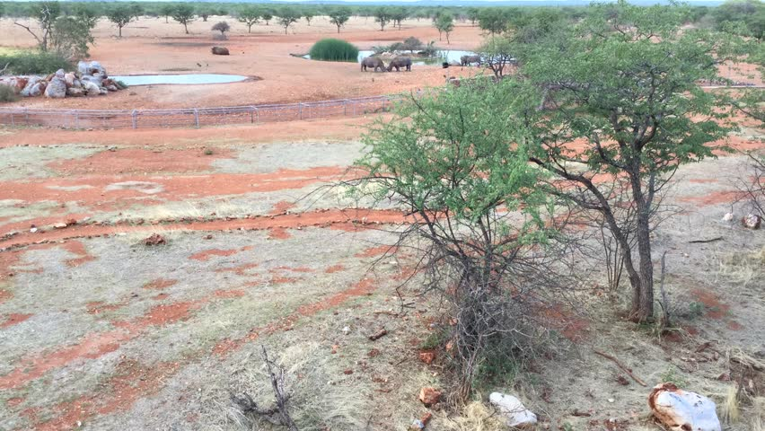 HD high quality video view of watering hole and pond in the middle of shrub savanna at a country lodge on sunny November afternoon in Etosha National Park area in northern Namibia, southern Africa | Shutterstock HD Video #1027537922