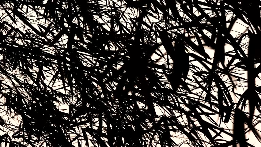 black silhouette of bamboo leaf