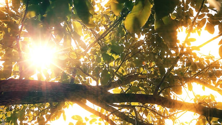 Morning in the forest. the sun's rays pass through trees | Shutterstock HD Video #1027714382