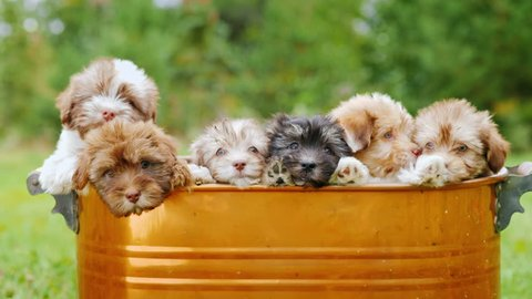 A large dog family of puppies sits in a bucket