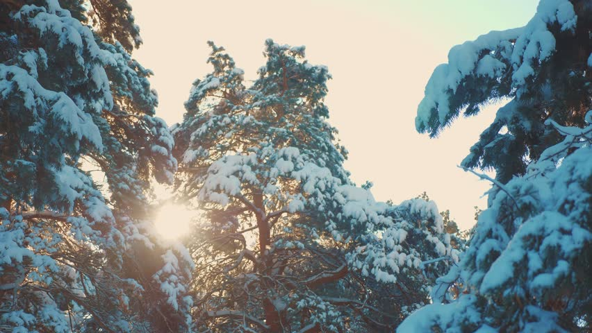 Tree tops winter pine snow branch sunlight glare winter landscape during sunset. Tree tops on a cloudy winter day. winter pine the sun forest in the snow sunlight movement. frozen frost Christmas New | Shutterstock HD Video #1028100272