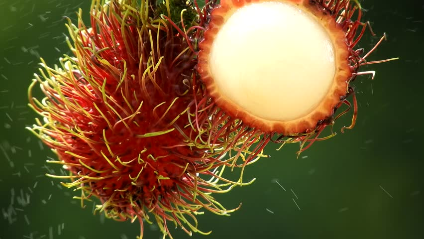 Close up rambutan fruit with with water droplet clips,fresh rambutan asian fruit,rambutan with juice