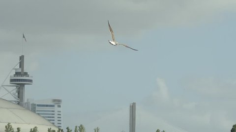 Bird, Seagull Flying with urban shore background