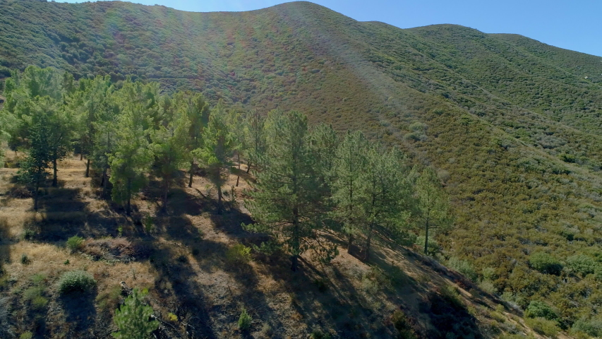 California National Forest Wooded Hills | Shutterstock HD Video #1029618872