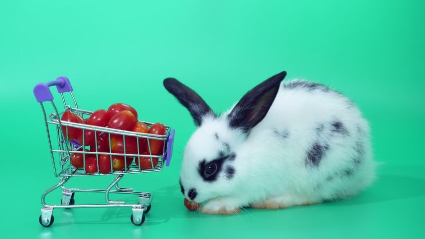 Black and white adorable baby rabbit on green screen.  Cute baby rabbit eating tomatoes in Shopping cart  | Shutterstock HD Video #1030148672
