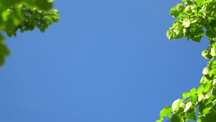 Nature clear blue sky background with fresh first spring foliage of trees as natural frame. Real time 4K video footage.