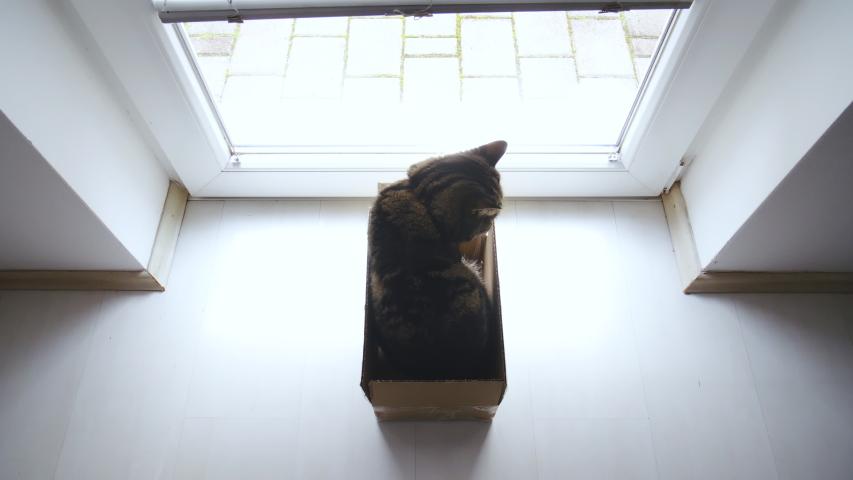 Cat in the box at the window door looking outside 4K | Shutterstock HD Video #1031108612