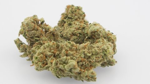 Jack Herer Stock Video Footage - 4K and HD Video Clips