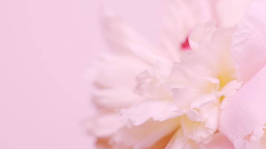 Bright pink natural background with a bouquet of peonies. Valentines day concept, wedding backdrop | Shutterstock HD Video #1031817452