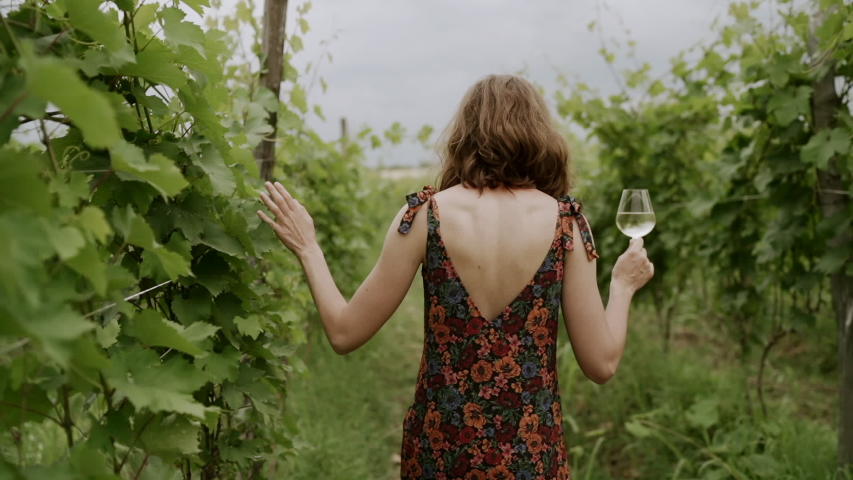 Woman in dress Walking in Vineyard, Back View of Woman at Agriculture Field, Examining Grape with glass of wine Early Summer, Slowmotion