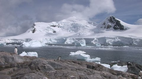 Pan across Paradise Harbour, Antarctica with Gentoo penguins in the foreground