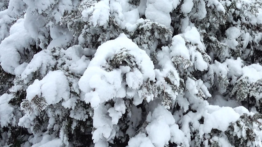 Winter day. Shooting in the park. Shooting in the winter. | Shutterstock HD Video #1032900662