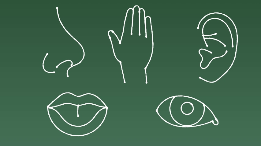 Doodle video sensory integration 5 senses per person. Hearing, sight, touch, taste, smell. White board animation  human sensory system with the display of the nose, mouth, eyes, ear, hands | Shutterstock HD Video #1033358072
