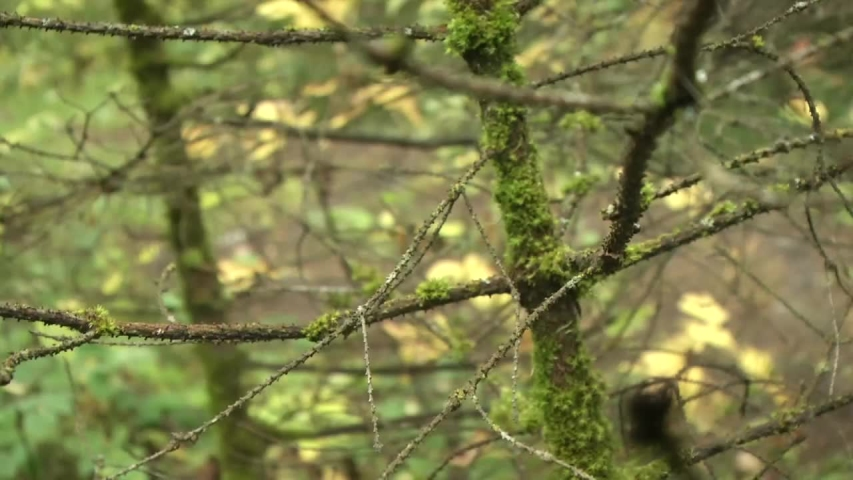 Nature forest taiga foliage moss | Shutterstock HD Video #1033767662
