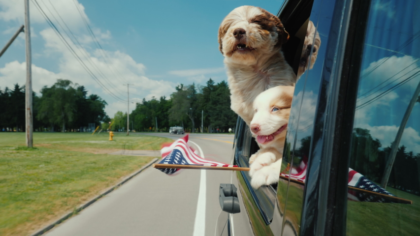 A pair of funny dogs with the flag of the United States look out the window of a moving car | Shutterstock HD Video #1034244242