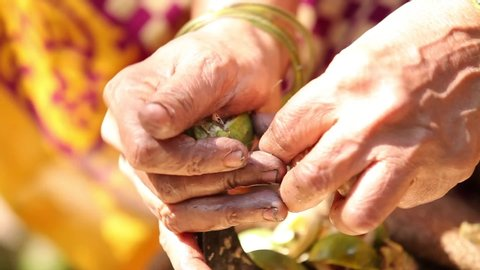 women peeling areca nut shells
