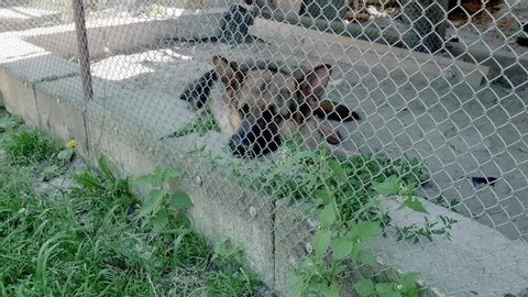 The sad dog lies on the ground in a cage. German Shepherd. View through a metal net from a distance.