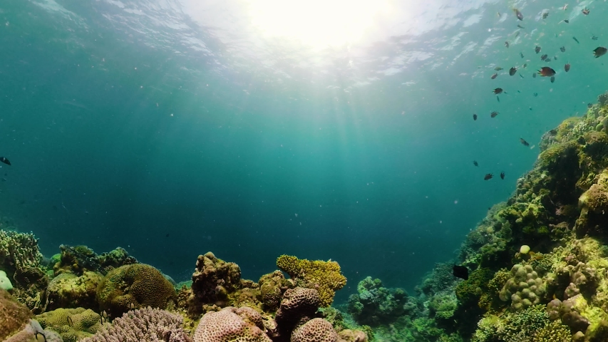 Beautiful underwater landscape with tropical fishes and corals. Life coral reef. Camiguin, Philippines. | Shutterstock HD Video #1035920672