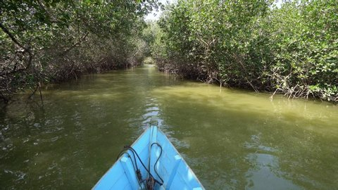 Shipping with a boat in Mangrove forest in the north of Peru, South America