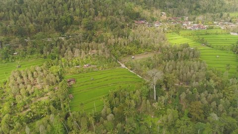 rice fields, agricultural land with fields with crops, trees in mountainside. aerial view farmland with rice terrace agricultural crops in countryside Indonesia