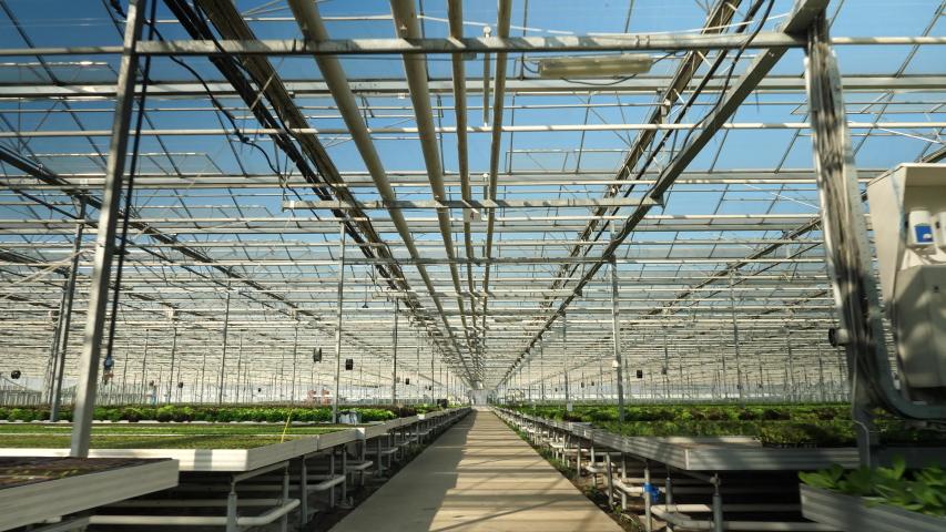 Drone flying in a modern greenhouse for oraganic crop. Modern farming #1036809872
