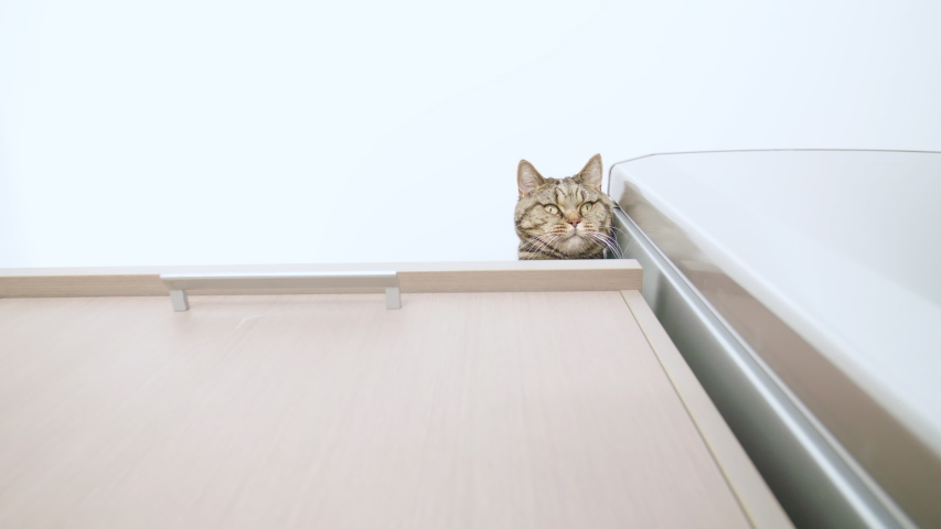 Cute cat peek down from the top of the cabinet 4K. Low angle wide shot of the cat head in focus peeking over the edge. | Shutterstock HD Video #1036954832