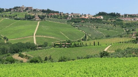 Countryside in Chianti. Olive trees, vineyards and cypress trees. Tuscany. Italy.