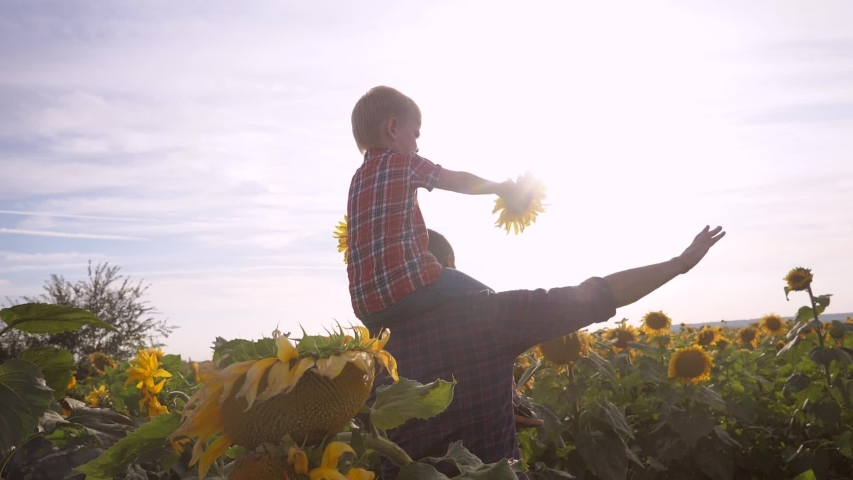 Happy family concept father's day slow motion video . father and son walk on the field of sunflowers farmers funny funny video lifestyle . happy family dad man rolls around the a neck of little boy   Shutterstock HD Video #1037217962