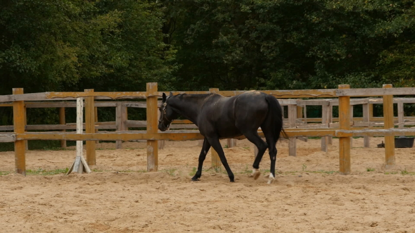 Horse walks in the aviary tracking shot, slow motion   Shutterstock HD Video #1037363072