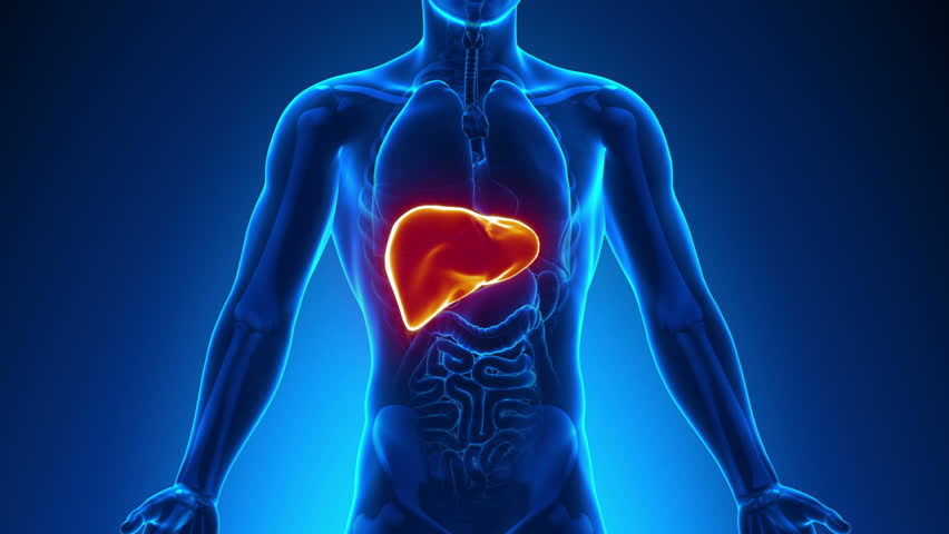 Liver Disease Stock Video Footage 4k And Hd Video Clips Shutterstock