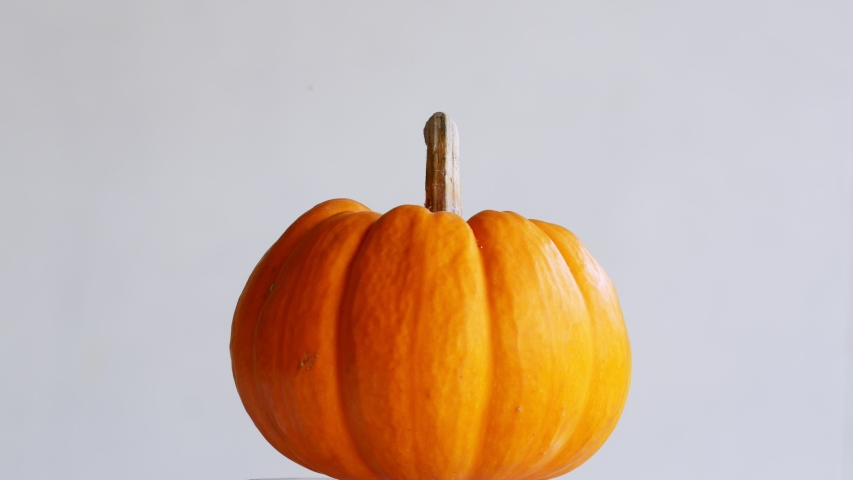 Pumpkin rotation Gray background  in Autumn Thanksgiving Day copy space | Shutterstock HD Video #1038637472