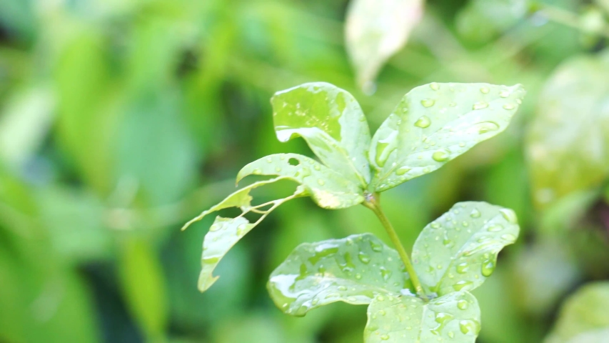 During the rain fall. Green plant leaves with rain drops. Concept of relaxation and harmony. #1038646442