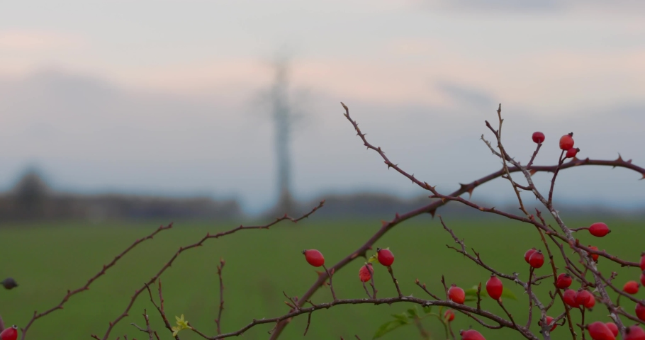 Single tree in the valley. Leafless strange tree in the middle of the field. Lifeless between alive concept. | Shutterstock HD Video #1040989322
